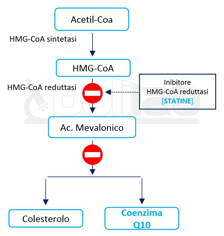 Assunzione di Statine - Coenzima Q10